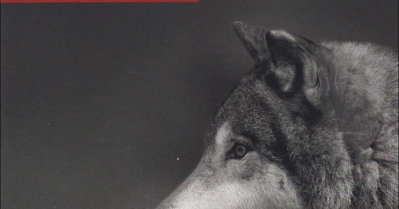 """Recensione libro """"La via del lupo"""" di Marco Albini Ferrari"""