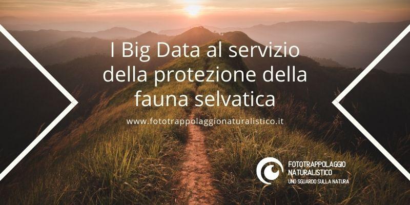 I Big Data al servizio della protezione della fauna selvatica