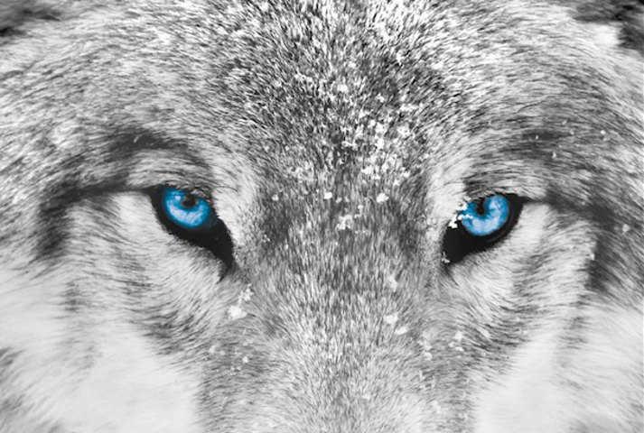 Recensione libro La Saggezza dei lupi di Elli Radinger